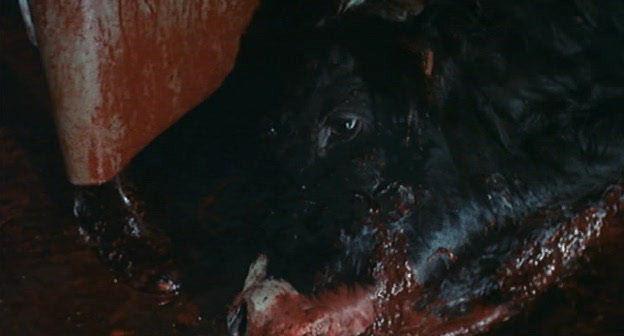 http://images.dead-donkey.com/images/abell2vq7.jpg