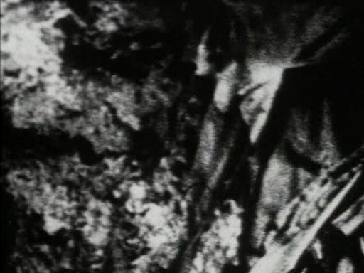 http://images.dead-donkey.com/images/vlcsnap44153lj0.png